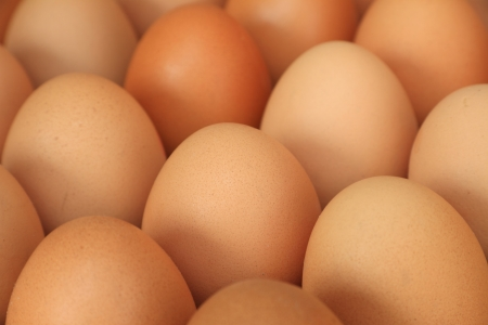 Close up of chicken eggs photo