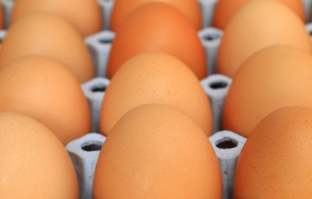 Chicken eggs in egg tray photo