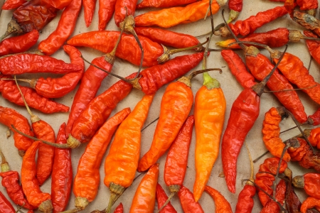Dry red chili peppers photo