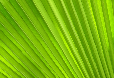 Palm leaves texture photo