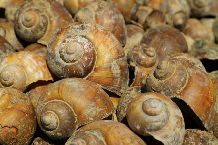 carcasse: Carcasse shell Beaucoup