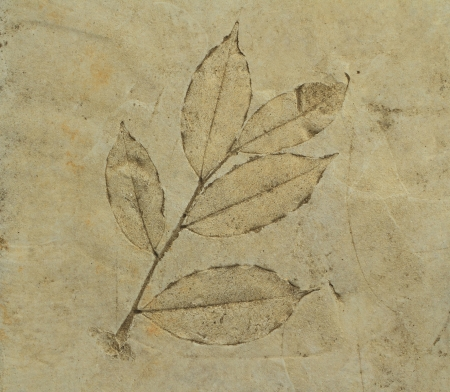 fossilized: The Imprint a leaves on cement floor
