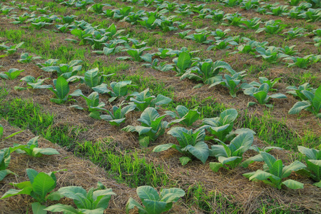 Vegetation cultivation farm Stock Photo