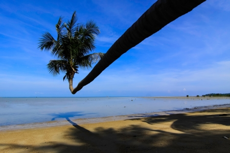 peculiar: The peculiar coconut tree on thebeach  Stock Photo