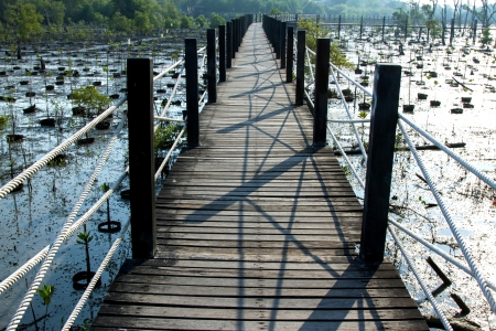 mangrove forest: Wooden Walkway in Mangrove forest