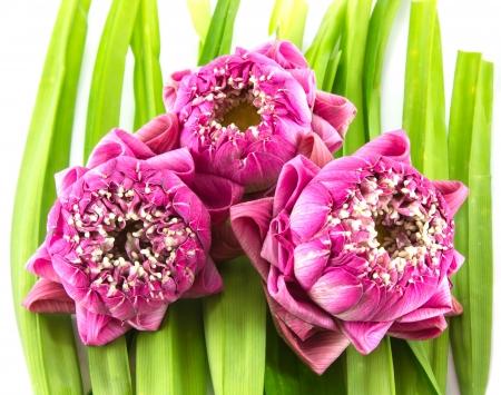 Lotus Flower on Pandan Stock Photo - 17626743