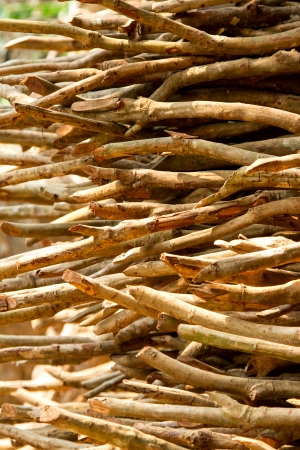 kindling: Dried twigs background