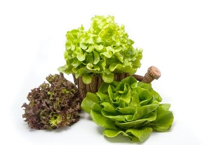 lechuga: hojas de lechuga Foto de archivo