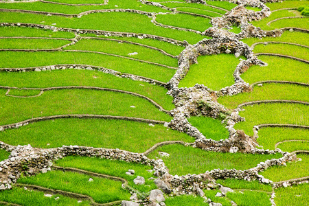 non cultivated: Rice fields near Sapa town in North Vietnam