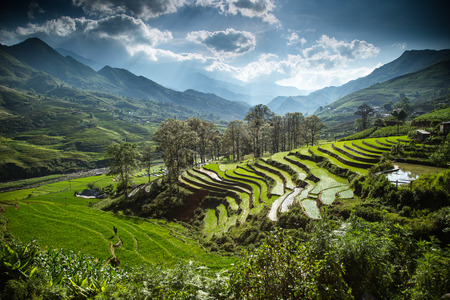 non cultivated: Rice terrace near Sapa town in North Vietnam Stock Photo
