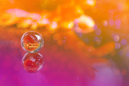 Soft tone of flower in crystal ball background. Stock Photo