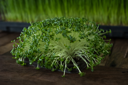 Microgreen, vegetable from growing of seed become sprout.