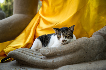 Thai cat relax on Buddha image hand.