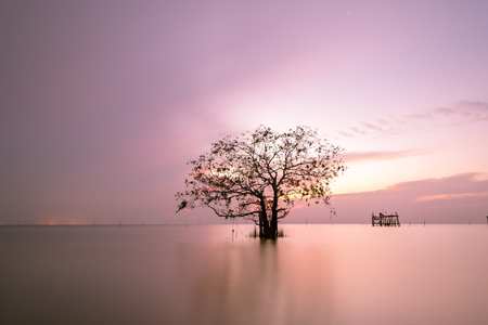 The tree stand in the lake in the morning.