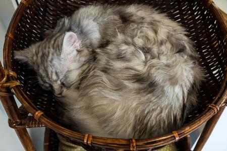 Long hair cat sleeping in the basket.