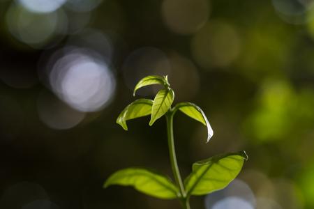 Leaf shoot on green bokeh background. 写真素材