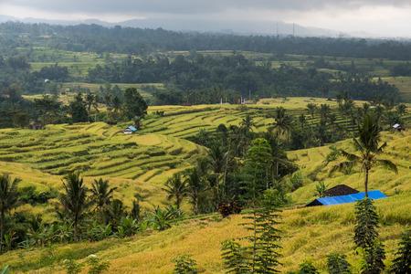 Jatiluwih rice terrace in Bedugul, Bali, Indonesia.