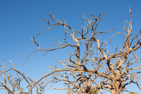 dirt: Dead or dry tree in Canyonlands against a blue sky