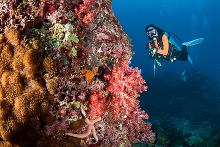 seafan: Young woman scuba diving on a beautiful soft coral reef in South Andaman, Thailand