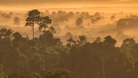 the morning forest around Hin Pad, Khiri Rat Nikhom District, Surat Thani, Thailand Stock Photo