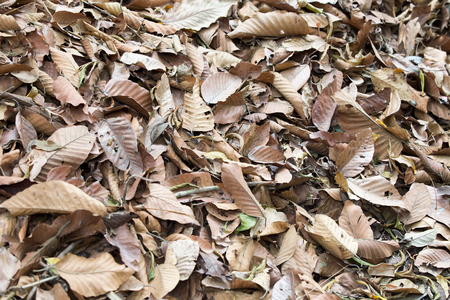 wooden floors: Dead leaves on floor shot ideal for backgrounds and textures