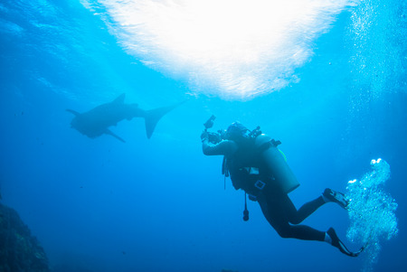 seafan: scuba diving photographer with whale shark in north andaman, Thailand