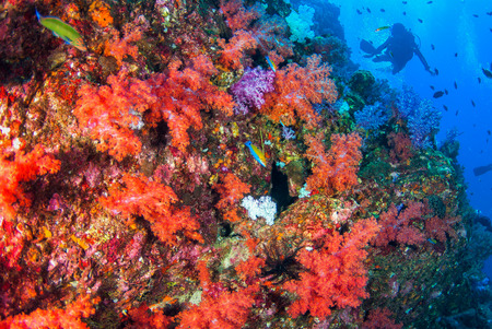 scuba diving with soft coral in South Andaman, Krabi, Thailand Stock Photo