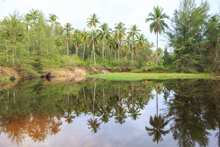 Reflection of coconut palm trees around the pond Stockfoto