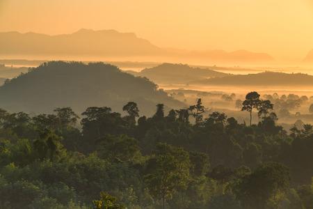 the morning forest around Hin Pad, Khiri Rat Nikhom District, Surat Thani, Thailand 版權商用圖片