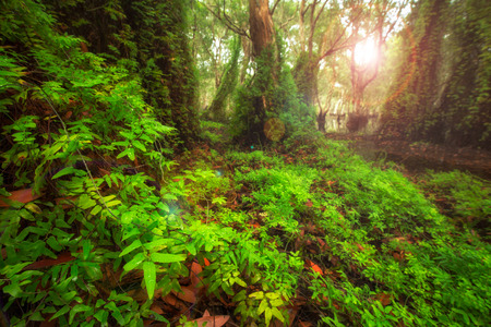 green trees and leaf background in forest with sun flare 免版税图像 - 112331861