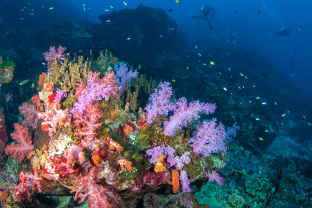Colourful soft corals in South Andaman, Krabi, Southern of Thailand 免版税图像