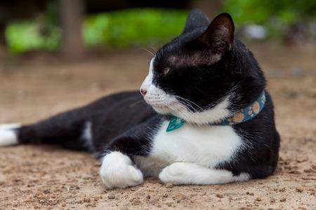moggy: Thai cat