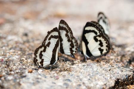 wonderful thailand: Beautiful Butterfly at Pang Sida National Park, Sagaew, Thailand