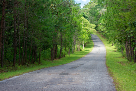 Road in the forest, Phu Kho, Phetchabun Province, Thailand Stock Photo