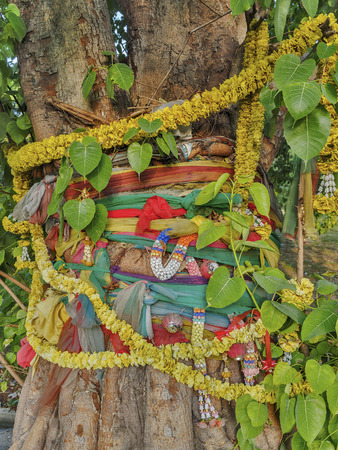thailand fabrics: Bangkok, Thailand, 19 MAY 2014, Bodhi tree of worship With colored fabrics wrapped around the trees and garlands, Benchakitti Park Editorial