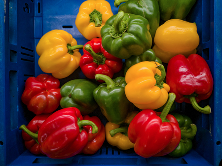 Its a photo of red, yellow and green bell peppers in close up in a blue basket or crate in a supermarket. Stock Photo