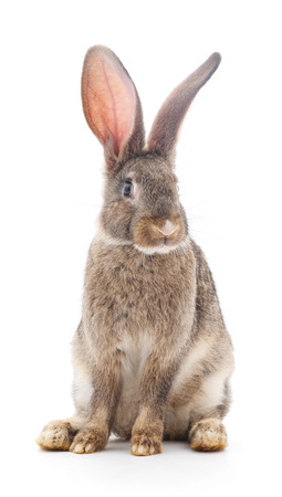 Brown baby rabbit on a white background. Stock Photo