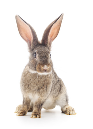 Brown-Kaninchen auf einem weißen Hintergrund. Standard-Bild - 44033830