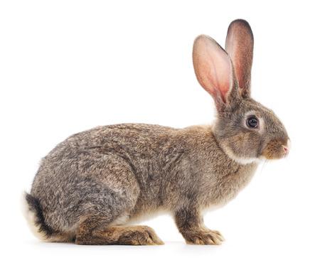 Brown-Kaninchen auf einem weißen Hintergrund. Standard-Bild - 44033833