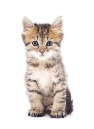 Graues Kätzchen auf einem weißen Hintergrund. Standard-Bild - 44163583