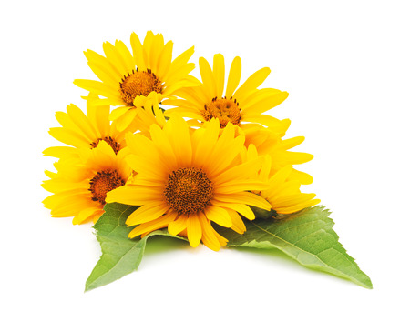 Yellow daisies isolated on a white background. Standard-Bild