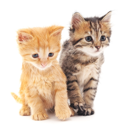 kitten: Two kittens isolated on a white background.