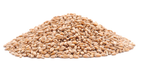 cosecha de trigo: grano de trigo aislado en un fondo blanco.