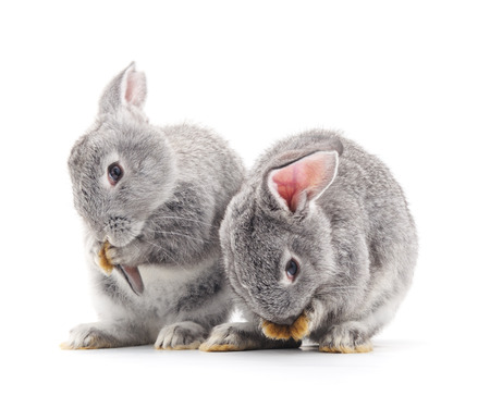 isolated on gray: Grey baby rabbits on a white background. Stock Photo