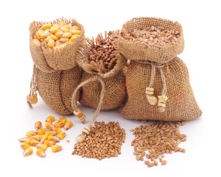 burlap sac: Sacks grain isolated on a white background.