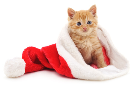 Kitten in the Christmas red hat isolated on a white background. Stock Photo