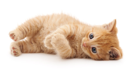 Red kitten lying isolated on a white background. 스톡 콘텐츠