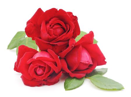 red roses: Rosas Rojas aisladas en un fondo blanco. Foto de archivo