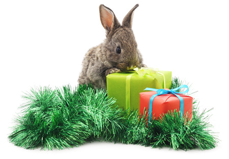 Rabbit with Christmas gifts isolated on a white background. Stock Photo