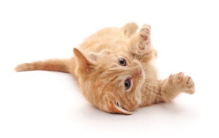 Brown kitten isolated on a white background. Foto de archivo